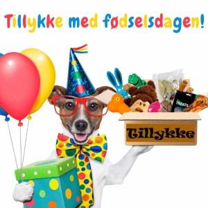 Fødselsdagsgave til hunde-Lille hund fra 4-8 kg.
