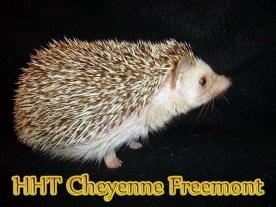 HHT Cheyenne Freemont