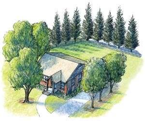 Treeforshade-Update-300x249.jpg