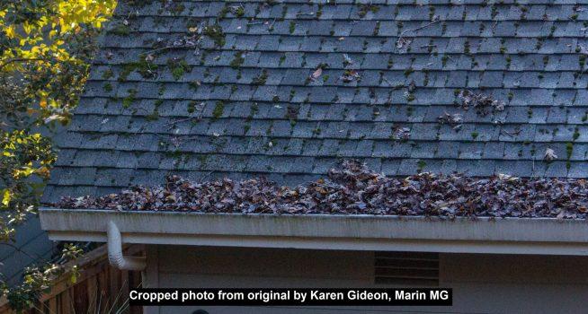 Leaf litter in gutters