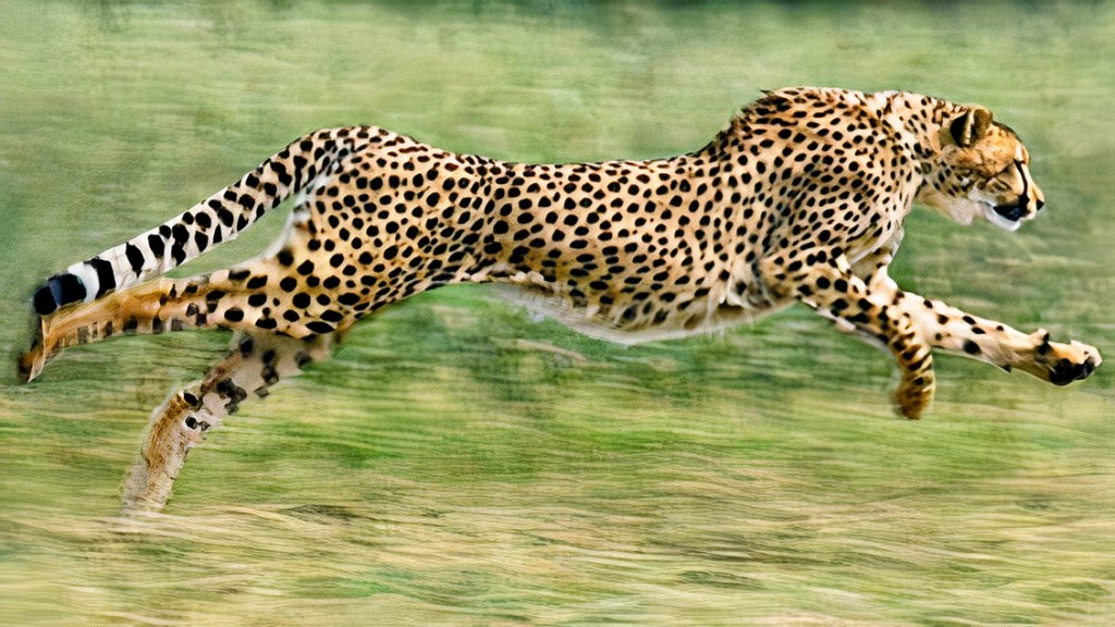 top 12 fastest land animals in the world 2020