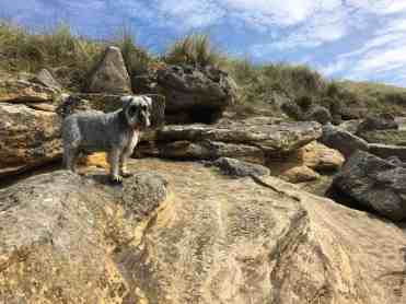 Bodie ready to help search the beach for little critters