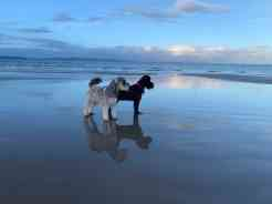 Dogs on Nairn beach in January 2019