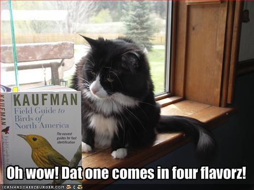 Funny-pictures-cat-studies-a-book-of-birds