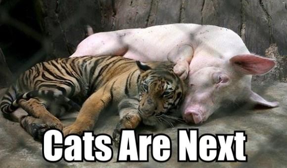 Catsarenext