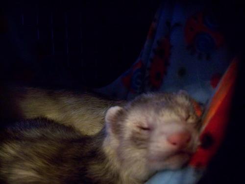 Bucky.sleeping