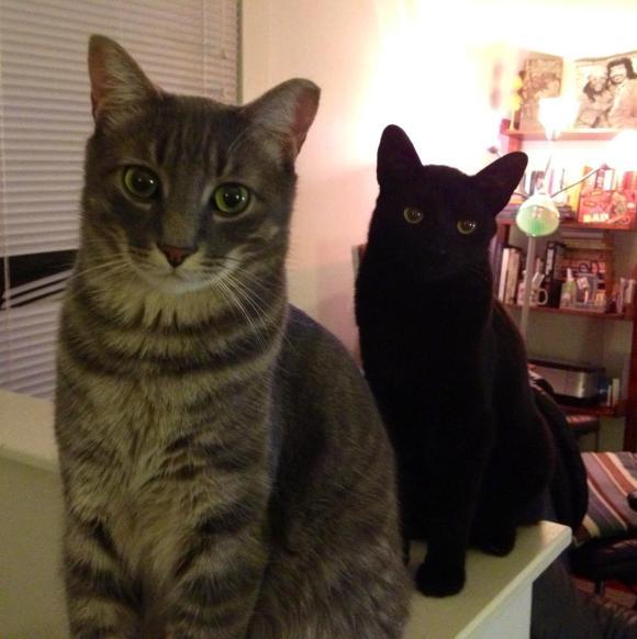 Kevin's kitties