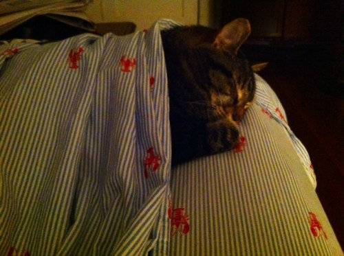 Undercover Kitty