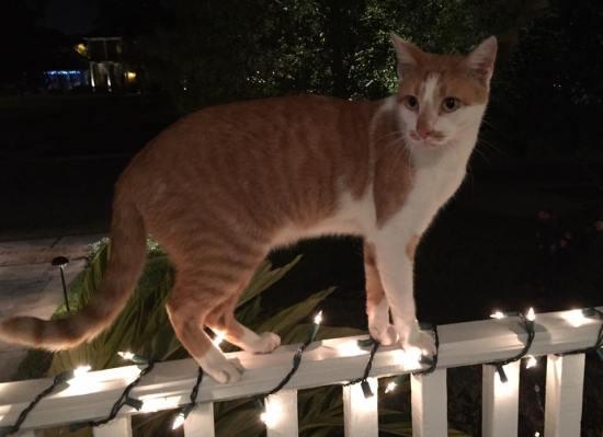 Milo-Cat-mas