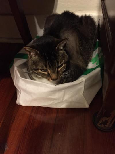 Oscar in the bag