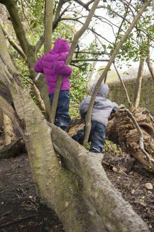 two children climbing a tree