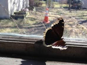 garage window 4