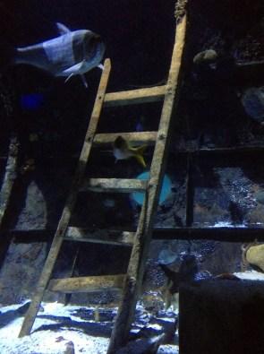 Ladder lines in an aquarium at the Aquarium