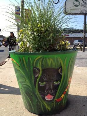 spring black cat