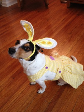 Who says there's no Easter Bunny?