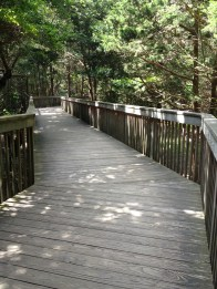 Cape May Zoo bridge to cross