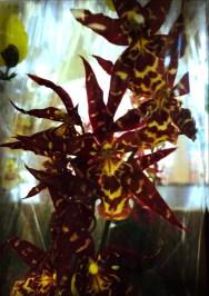 delicate flower 3