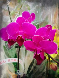 delicate flowers 2