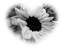 BW flower 2