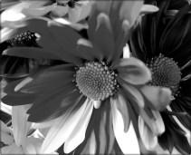 BW flower 4