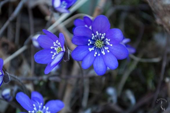 nine_petals_0027p