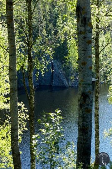 trees_leaves2307