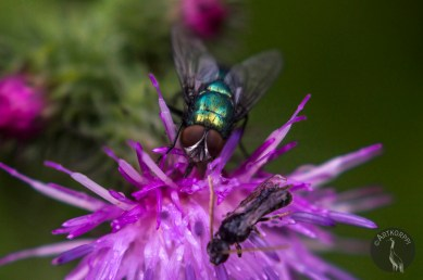 fly and bug 0237