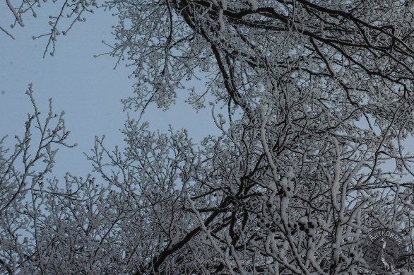 winter_branches9752