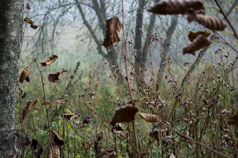 brown_leaves_0170p