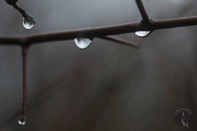 raindrops_0041p