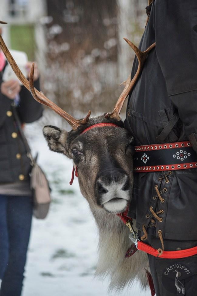 brown_reindeer_0040p