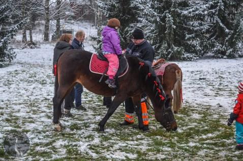 horse_pony_rides0030p