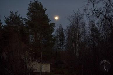 moonlight_0227p