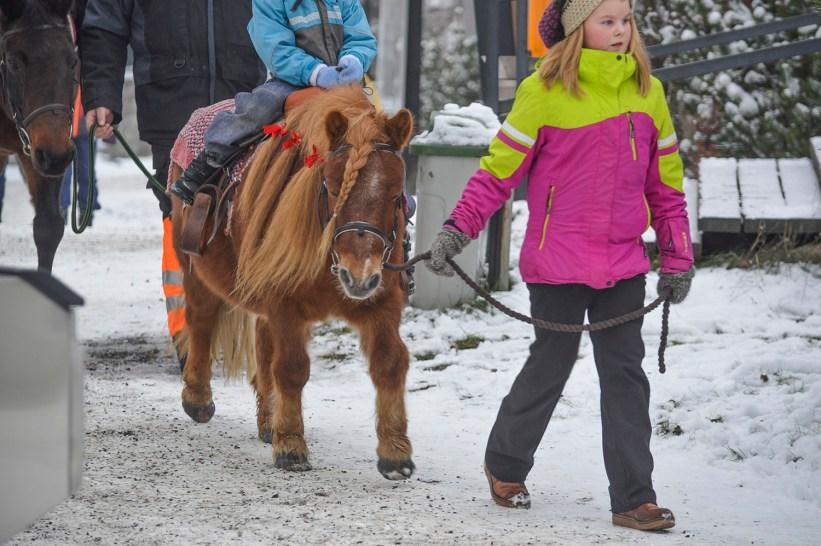 pony_and_horse_0019p