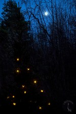 spruce_moon