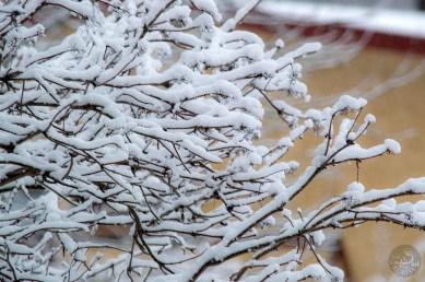 snowbranches_yellow_0090p