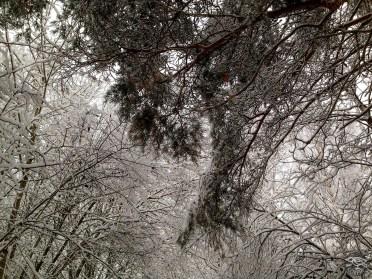 snowy_sunday_5560p