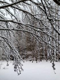 snowy_sunday_5566p