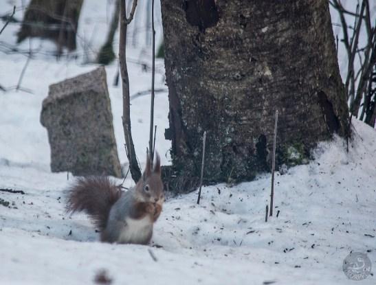 squirrel_0005p