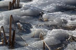 lake_ice_0034p