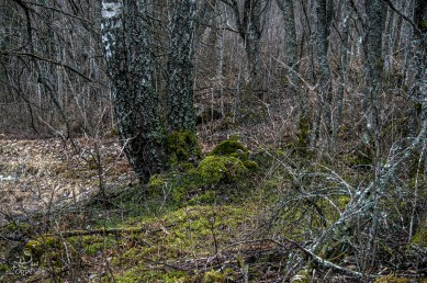 troll_forest_0099p
