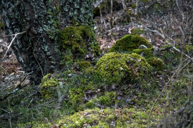 troll_forest_0100p