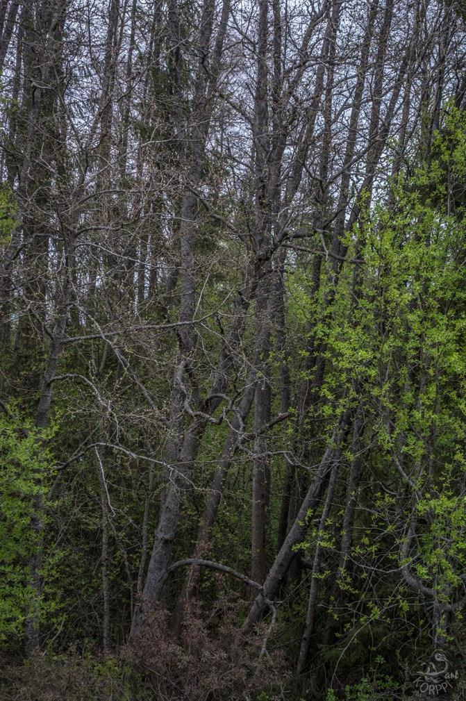 trees_0053p