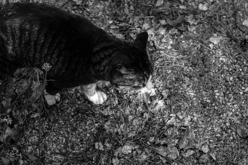 cat3159BWp