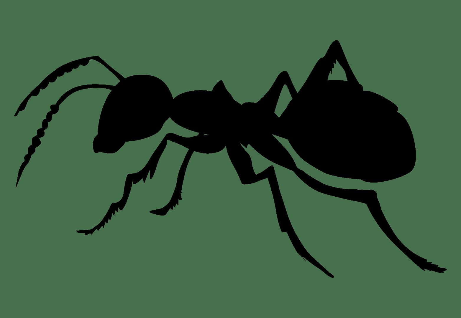 Bee Treatment In Massillon Canton Stark County