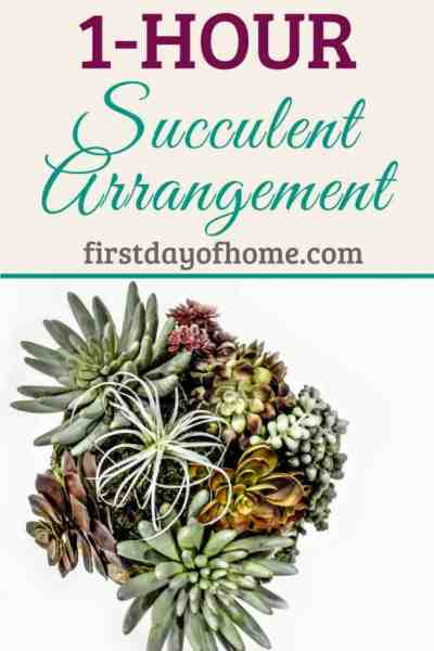 One Hour Succulent Arrangement