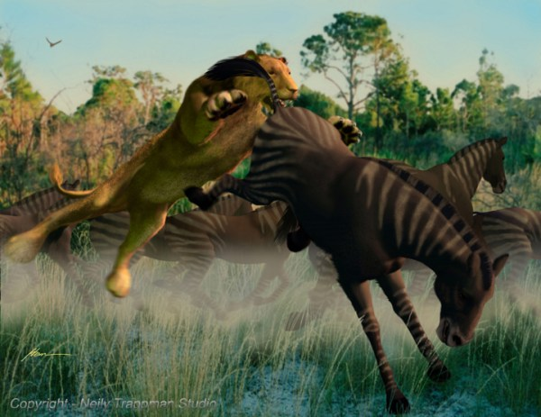Prehistoric American Lion attacking Equus - early horses in Florida.