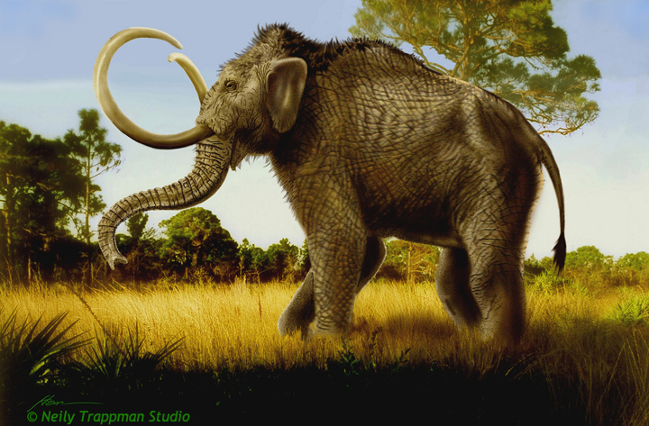 Colmmbian Mammoth