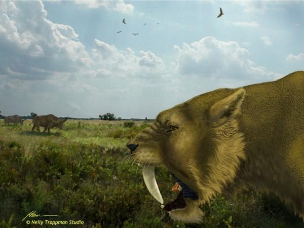 Sabertooth Cat hunting a Bison Latifrons Calf
