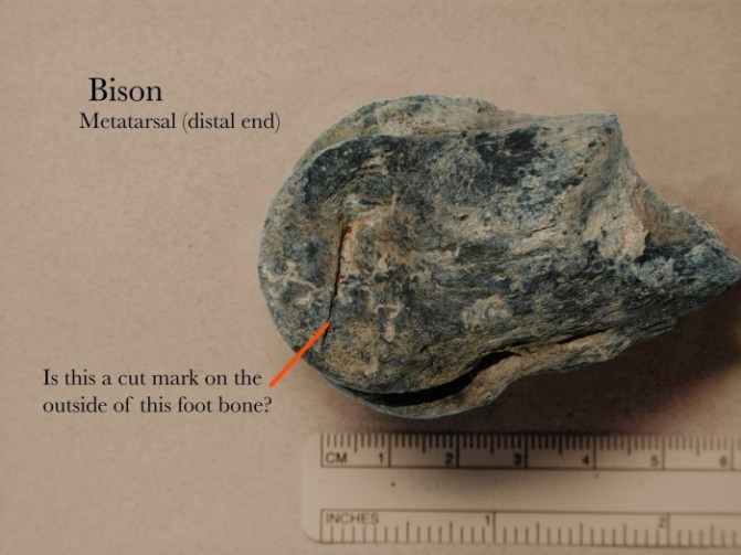 030 Bison Foot bone- 037